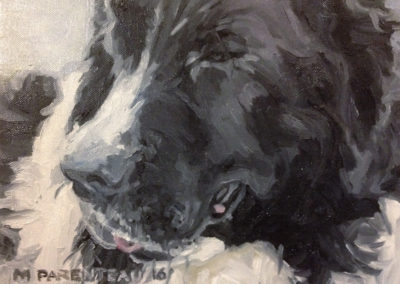 Newfoundlander Dog (Oil on Canvas)